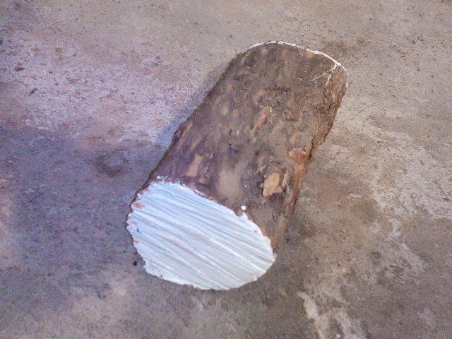 Бревно дерева кизил для явары