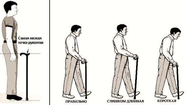 Оптимальная длина трости по росту